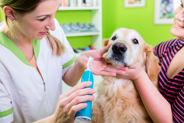5 Reasons Why Dogs Toothpaste Is Important For Every Dog