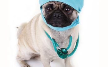 dog cosmetic surgery