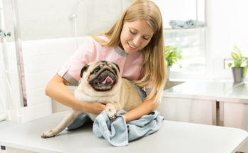 pet care jobs